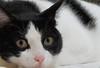 Tola (Egg2704) Tags: españa cats cat spain kitten gatos zaragoza gato animalia aragón tola cc800 cc700 cc400 cc300 cc200 cc100 cc500 cc1500 cc1300 cc1000 cc600 cc900 cc1400 cc1200 cv25 cc1100 cc5000 granfoto catnipaddicts hellopussycat superfotosextraordinarias egg2704