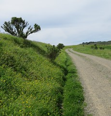 Fort Ord National Monument (SeeMonterey) Tags: spring hiking scenic trails hike hills salinas valley poppies wildflowers rollinghills salinasvalley fortord luping