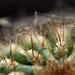 Spider Web on Cactus