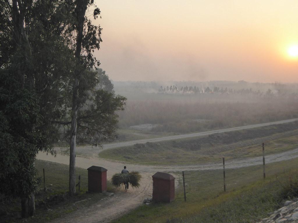 Hauling Sugar Cane at sunset