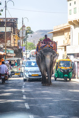 Jaipur Streets (Gigin - NoDigital) Tags: street people india elephant man nature car animals asia objects places transportation geography jaipur amberfort