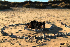 Fun on the Beach (sharongellyroo) Tags: beach seaside norfolk bordercollie ki walkies wintertononsea
