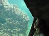 Milos (vincentvanleest) Tags: netherlands aquarium arnhem milos burgersdierenpark