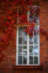 MH_PL_4 (milko hakimsan) Tags: park autumn red house brick green window colors beautiful leaves yellow bench colorful grille lovely atmospheric puisto syksy virginiacreeper parthenocissus punainen ruska penkki kaunis lehdet keltainen villiviini vriks syksyn virhe tunnelmallinen