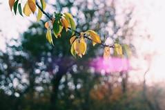 2015-09-29 09.58.55 1 (anastasiya_klenyaeva) Tags: sky nature yellow russia autmn     saratov vsco vscocam vscorussia vscosaratov