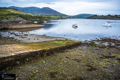 Ireland_III 90 (White Shadow 56) Tags: d600 tamronaf28300mmf3563diiivcldasphericalif ships seaport september sailboats 2015 fishing ireland dingle dingleireland sheep northatlanticocean ocean mountains marianne mark flowers farmers birds euro britishpound