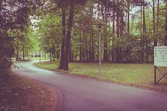 366-140 (bine77) Tags: tree nature canon hospital way path natur pancake 24mm bume baum projekt nrnberg weg pfad klinik 366 infantloss eos100d deinsternenkind sdklinikum