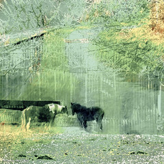Spring Greens (Lemon~art) Tags: trees horses colour green texture barn spring feeding farm peaceful manipulation