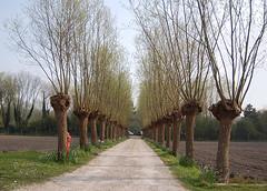 160423 acaK 160503  Ththi (thethi (don't like beta groups)) Tags: rural belgium arbre chemin alle koksijde vlaanderen saule coxyde belge
