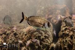 5D__5472 (Steofoto) Tags: genova porto pesci acquario darsena crostacei rettili cetacei molluschi