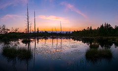 An Evening To Remember (DJawZ) Tags: trees sunset reflection water beautiful pine spring may nj marsh barrens sunsetwx epscottphotog
