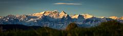 Homeland (Brunzolini) Tags: morning schnee panorama mountain alps berg sunrise landscape schweiz switzerland swiss peak glacier chain ridge alpen gletscher landschaft sonnenaufgang morgen berner schreckhorn wetterhorn gipfel lini rosenlaui bergkette rosenhorn brunzo