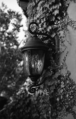 Illuminate. (Abram Goglanian) Tags: leica blackandwhite film ma fujineopan400