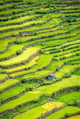 Batad Rice Terraces (pietkagab) Tags: trip travel green trekking trek photography asia rice pentax hiking exploring philippines farming sightseeing terraces hike adventure plantation agriculture batad ifugao luzon pentaxk5ii pietkagab piotrgaborek