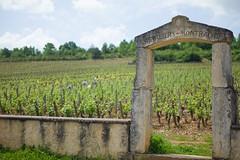 201607590 (Klaus Harbo) Tags: vin bourgogne beaune