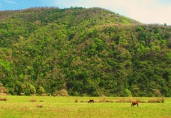 Caballos,Parque nacional Siete Tazas,Chile (Gabriel mdp) Tags: caballos paisaje landscape contrastes montaas cordillera andes reserva parque nacional siete tazas region maule chile treking verde green paz tranquilidad arboles nature naturaleza