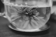 IMG_7666 (TheFreckledFrenzy) Tags: blackandwhite art film lens tea f14 grain sigma books cigars matte blooming