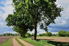 Landschaft bei Tungeln / Landkreis Oldenburg (berndwhv) Tags: trees landscape deutschland natur felder landschaft feldweg weg landschap norddeutschland niedersachsen landkreisoldenburg tungeln