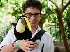 P1130539 (lychee_vanilla) Tags: bird garden toucan costarica lapaz waterfallgarden tucn blackmandibledtoucan ramphastosambiguus vigel quioro tucnpiconegro