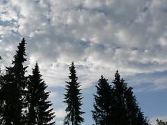 treetops and sky (achatphoenix) Tags: home treetops sky ostfriesland garden clouds ciel cielo nuages spring springtime