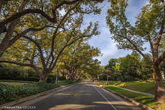 On the Sunny Side of the Street (Samantha Decker) Tags: california ca wideangle socal pasadena uwa canonef1635mmf28liiusm canoneos6d samanthadecker socal16
