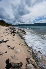 The beach on Sandy Cay (Key) (3scapePhotos) Tags: travel sea vacation beach vertical sailboat island islands boat key sailing sandy virgin beaches tropical british caribbean cay tropics bvi britishvirginislands sandycay