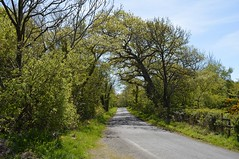 Tree-lined Lane. Near Symington, Ayrshire. (Phineas Redux) Tags: scotland ayrshire countryroads dundonaldayrshire ayrshirescenes symingtonayrshire