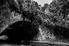 IMG_3833-2 (Romain Roellet) Tags: wide angle ultra bw black white bridge tunnel river water trees lookup looking up hdr high dynamic range