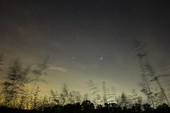 """Magic in the Unknown"" (Melissa June Daniels) Tags: longexposure nightphotography travel trees sky grass night clouds stars movement lowlight nightscape space explore treeline nightlandscape melissajdaniels melissajdanielsphotography melissajunedaniels thenymphandthebee"