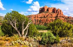 Cathedral Rock, Sedona, Arizona (Buck--Fever) Tags: cathedralrock sedona sedonaarizona arizona arizonaskies arizonadesert oakcreek canon60d tree trees deadtree landscape cactus centralarizona