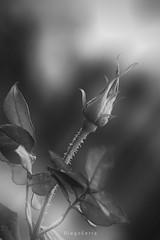 Juego de luces (Diego Serra) Tags: light flower sunrise resplandor