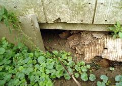 Woodchuck home (honestabby) Tags: woodchuck