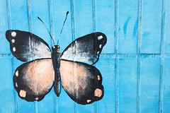 Butterfly Wall Wall Art Colours Colors Insect Painting IPhoneography City Day Blue China Shenzhen Brick Painted (Little Inca Photography) Tags: china city blue brick colors wall butterfly painting insect day colours painted wallart shenzhen iphoneography