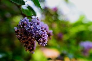 flower² 725