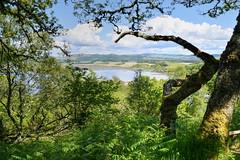 Woodland walk from Crinan harbour to Kilmahumaig (Aliy) Tags: scotland knapdale crinan woods woodland path trail pathway walk trees view soundofjura jura