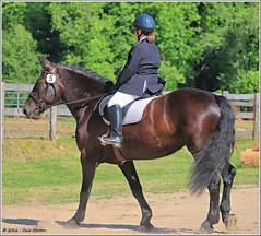 Medusa Maker (2.2 Million + views!!! Thank you!!!) Tags: horse animals canon geotagged eos athena equestrian dressage 70d efex efs55250mmstm pspx8 paintshopprox8 medusamaker erinngillespie