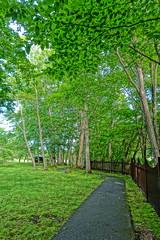 Green Park (sjrankin) Tags: japan river hokkaido edited hdr yubari takinouepark yubaririver yubarikawa takinouekoen 24june2016
