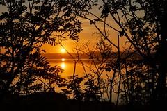 Frdesfjorden, Norway (Vest der ute) Tags: trees seascape norway sunrise landscape refections rogaland fav25 fav200 g7x ryksund