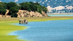 China Camp State Park, San Rafael, California (Stephen Sarhad) Tags: statepark ca usa bay marin marincounty sanrafael chinacamp