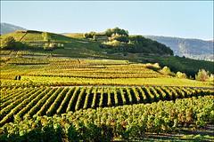 Vineyards in Bourg, next to Sion, Switzerland (Katarina 2353) Tags: mountain alps film landscape switzerland vineyard nikon europe swiss katarinastefanovic katarina2353