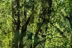 Park Life 34 (pni) Tags: park tree green suomi finland leaf helsinki multipleexposure trunk helsingfors tlnlahti tripleexposure multiexposure skrubu pni tlviken pekkanikrus