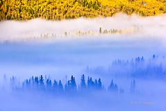 Transition (Mengzhonghua) Tags: blue autumn fall yellow fog landscape aspen transition frest