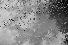Needles in the sky - Fuji Neopan 400 (emulsivefilm) Tags: 2016july 35mmformatfilm blackandwhitenegative ei400 emulsivedailyphoto fuji fujineopan400 iso400