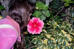 Flower and Mel ( Mischa ) Tags: pink flower girl garden sydney australia smell sniff glebe