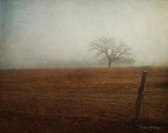 Foggy Morning (peppermcc) Tags: fog fence riofrio