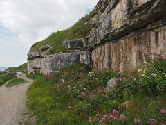 insect refuge along the cliffs (Johnson Cameraface) Tags: summer holiday june portland olympus dorset f28 portlandbill em1 2016 freshwaterbay 1240mm micro43 mzuiko johnsoncameraface omde1