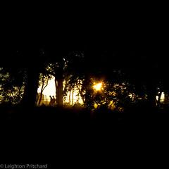 Shoot Into The Light (widdowquinn) Tags: nyc newyorkcity trees light sunset shadow summer usa sun newyork silhouette warm unitedstates path centralpark manhattan runners joggers