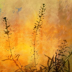 Tiny Weeds in the Sun (hollykl) Tags: abstract photomanipulation square weed digitalart hypothetical vividimagination arteffects shockofthenew sharingart awardtree