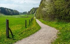 Springtime in the meadow (Richard Sir) Tags: flowers sky green nature grass sunshine denmark landscapes spring nikon meadow brabrand d7100 1855mmf3556gvr nikond7100