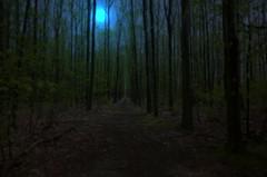 I'll find... (Johan (Different on or off)...) Tags: trees light moon netherlands forest dark nikon path drenthe 1685mm d7000 johan